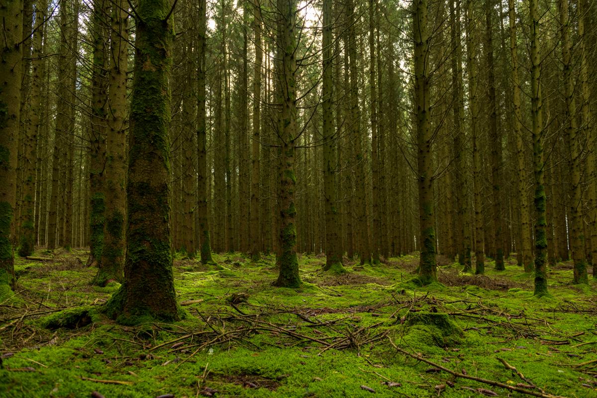 Herfstwandeling Ardennen